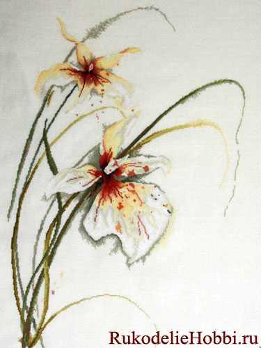 Вышивка нежные орхидеи